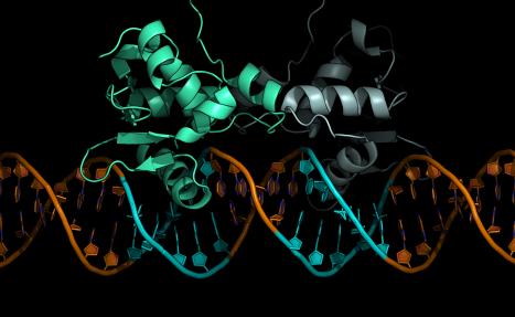 bound_DNA_2